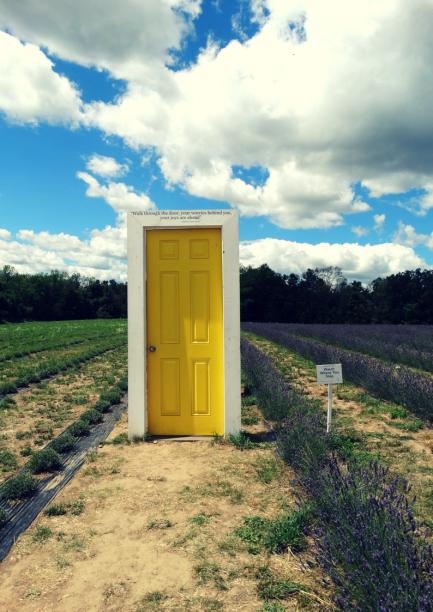 lavender farm toronto terre bleu